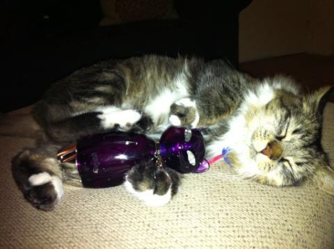 Who designed Purr's bottle?