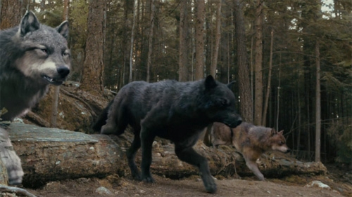 twilight wolf pack in - photo #24