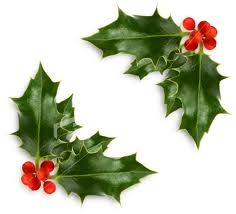 Holly berries are poisonous.....True or False ?