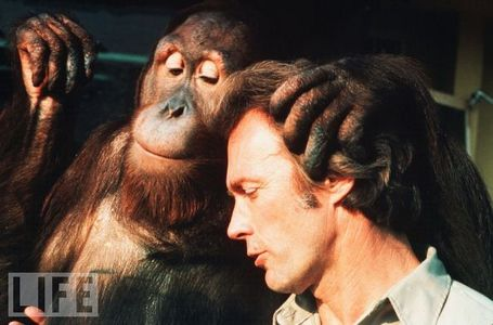 Every which way but loose - Clint lives with an orangutan named ?