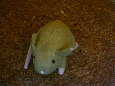 What kind of mouse is this?