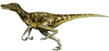TRUE hoặc FALSE? - Velociraptor had feathers