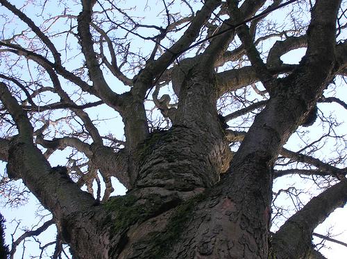 What does the lightning struck oak tree symbolise?