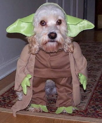 Who is this dog dressed up as?