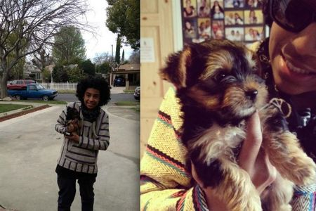 What is Princeton's new puppy's name?