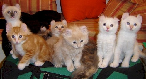 These kittens are  _________