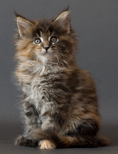 This kitten is  _________