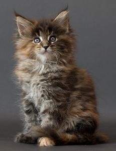 This kitten is _________
