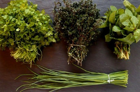 Does Sin like herbs, fresh herbs? What?