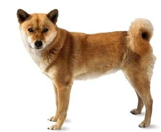 What breed of dog is this?(Part 1)