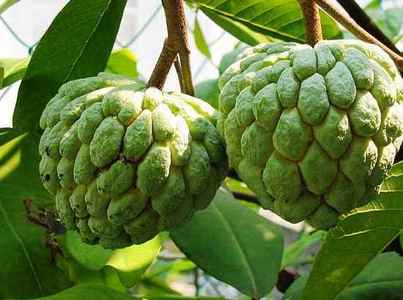 What fruit is this?