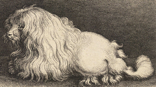 This is an engraving of a dog in done in 1649 ...