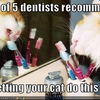 4 out of 5 dentists recomend not letting your cat do this Nemisis photo