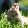 bunny eating Tinycupid-sama photo