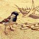 130_Sparrow's photo