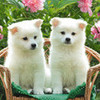 puppies76 photo