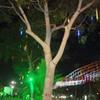 at cocos festival 2012 kimngan_vn photo