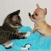 cute puppi and kitty BRIDGET14 photo