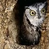 The owl i painted OwlEyes12 photo