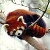 pandabear1243 photo