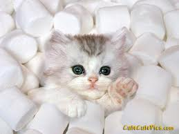 Marshmellow Kitty