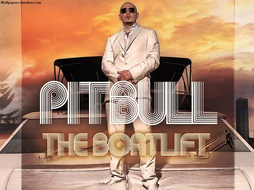 Pitbull wallpaper