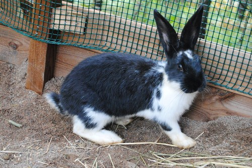 my prettyful bunny BELLATRIX♥