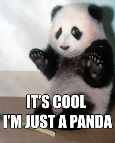 Its cool! im just a panda!