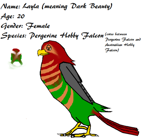 Layla the falco, falcon