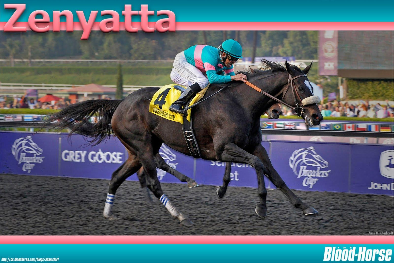 zenyatta racehorse height