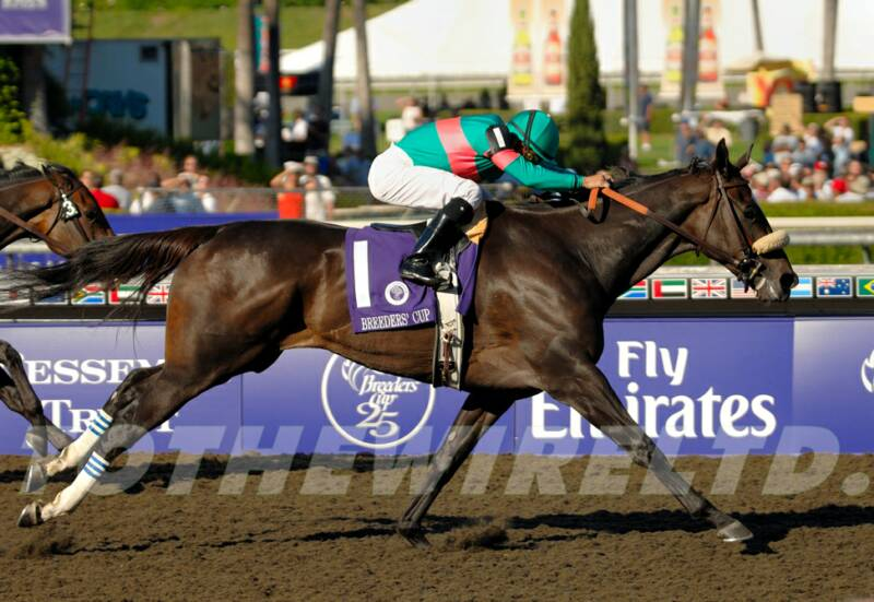 zenyatta racehorse how tall