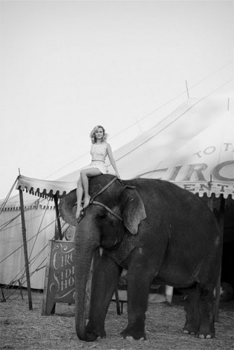 ► water for elephants;