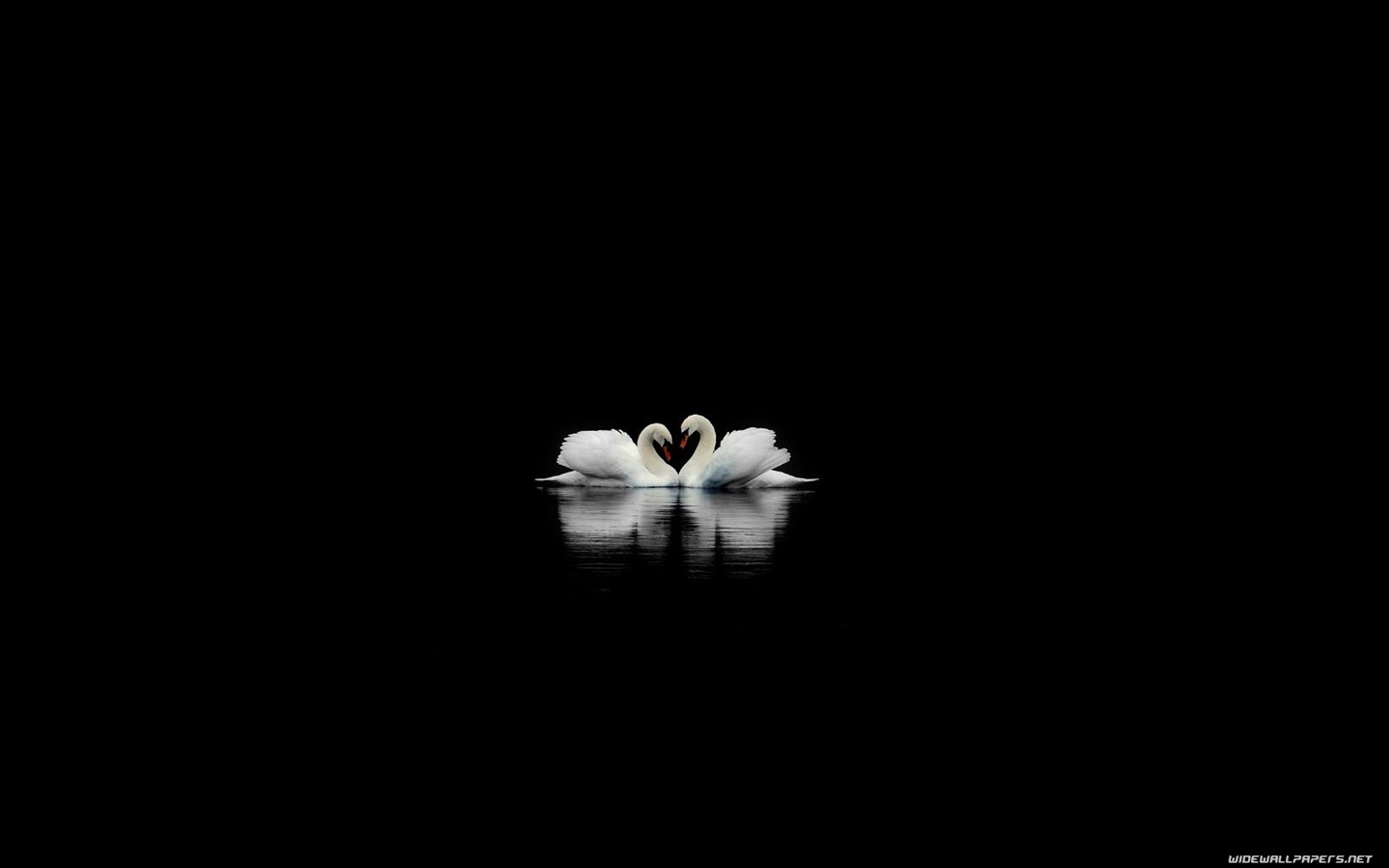 Swans on a Black Lake Wallpaper
