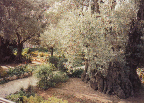 present day garden of gethsemane