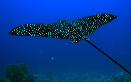 Animals images Ocean Animals HD wallpaper and background photos