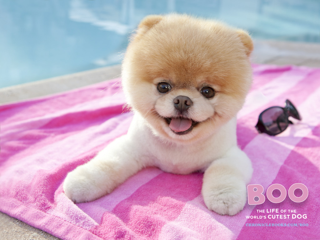 boo & buddy images boo hd wallpaper and background photos (29875212)