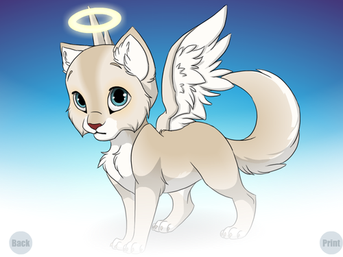 cute Angel kitten