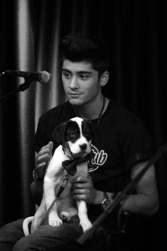 Zayn Malik - Black and White