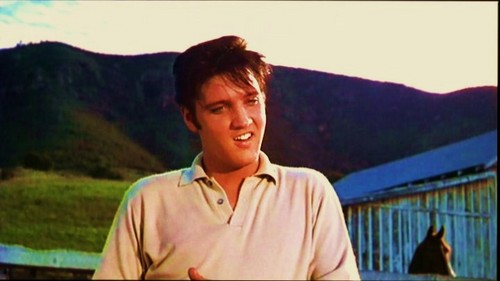 Elvis Fotos from His Movies!