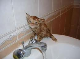 मूंगफली, मूंगफली का is not happy after his swim in the sink!!!