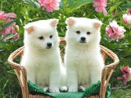 cute puppies in chair