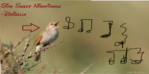 Sing Sweet Nightingale