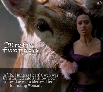 Merlin Fun Facts (2)