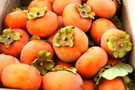 The Fruit Trivia Quiz